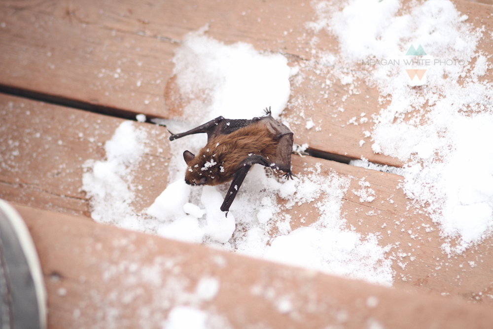 Meagan White Photo - A BAT IN OUR HOUSE 008